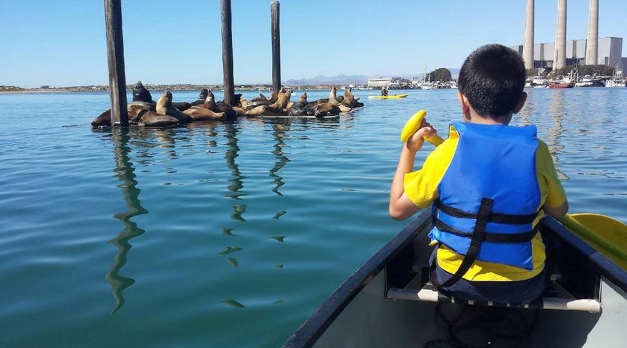 Our grandson checking in with his buddies, Morro Bay, CA   10/2013