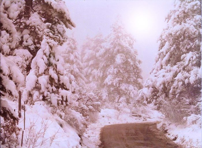 Maxwell Hill Road, South Fork Deer Creek Canyon, Deermont, CO 12/24/77